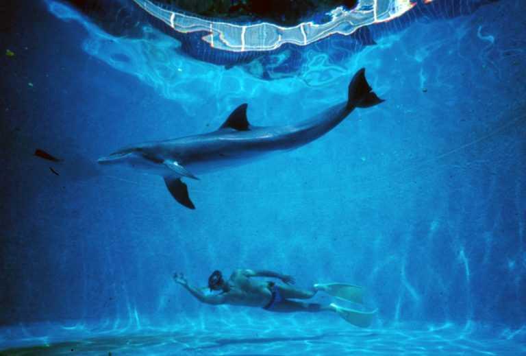L'uomo delfino scena film